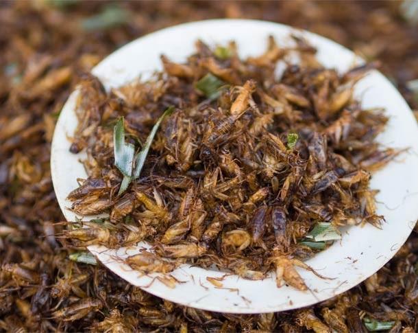 jing leed or grasshopper fried