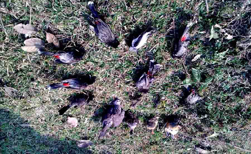 mass bird suicide in jatinga village, a haunted place in assam