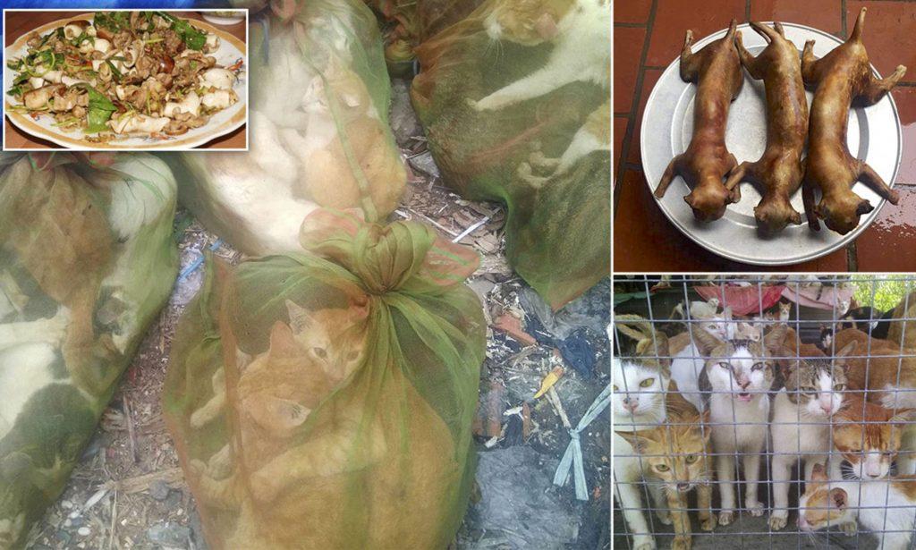 cat eaten in east asia