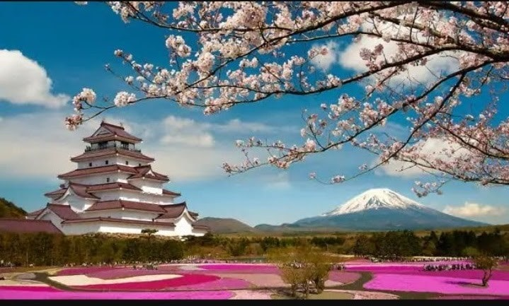 temple and blossoming tree in japan