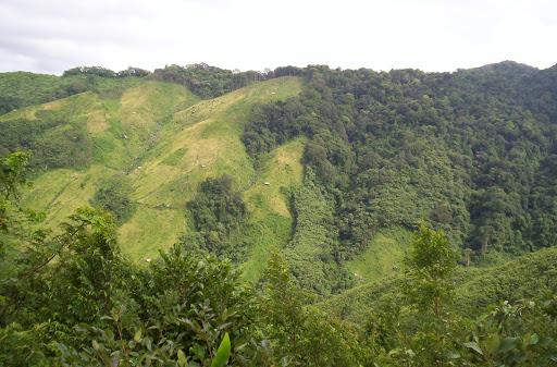 Meghalaya beautiful green forests
