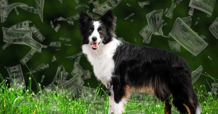 border collie dog got 5 million dollar from its businessman owner in tennessee