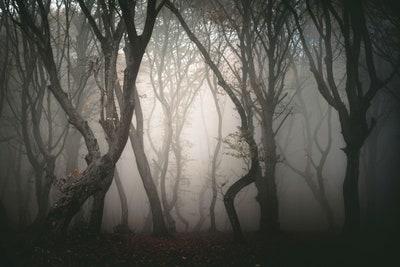spooky bushes